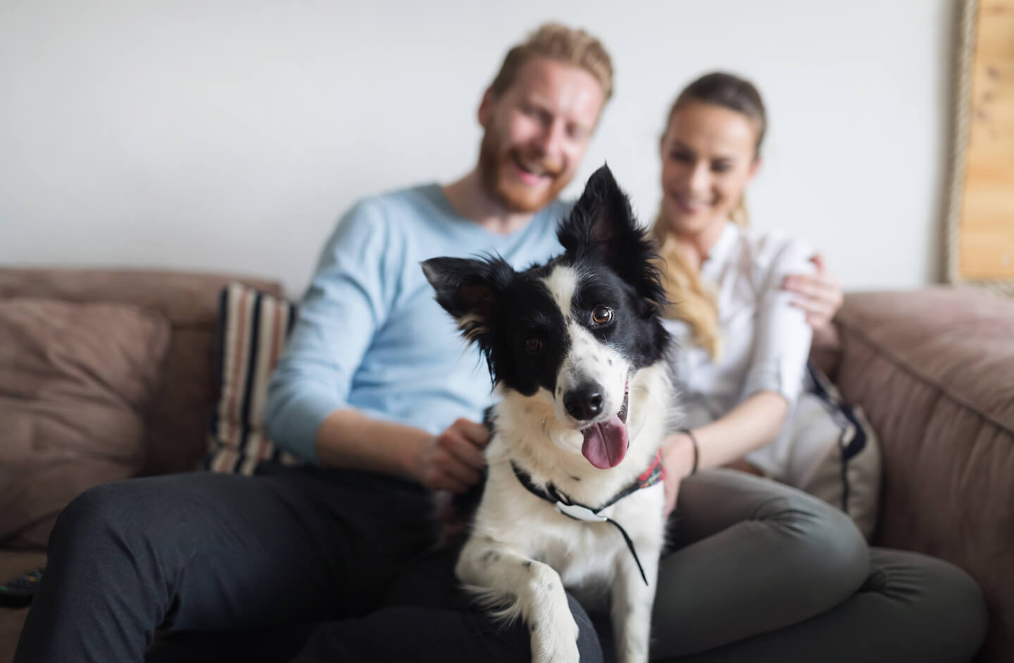 Should Landlords Let to Tenants with Pets?